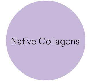 Native Collagens